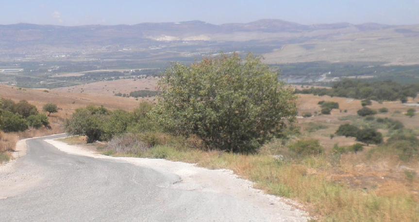 דרך הנפט לכיוון צפון, ליד זעורה-עין פית. קבוצת העצים מימין - תל פאח'ר. לכאן בערך הגיע רובקה בשעה 16:56. להגדלה - לחצו