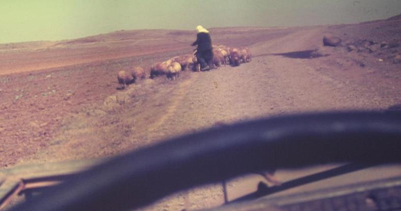 רועה דרוזי