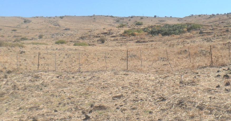 הסברסים של עין א-דייסה שמתחת לדרך הנפט. בפינה השמאלית העליונה נראים שני גלי האבנים המקבילים אליהם מתיחס ישי