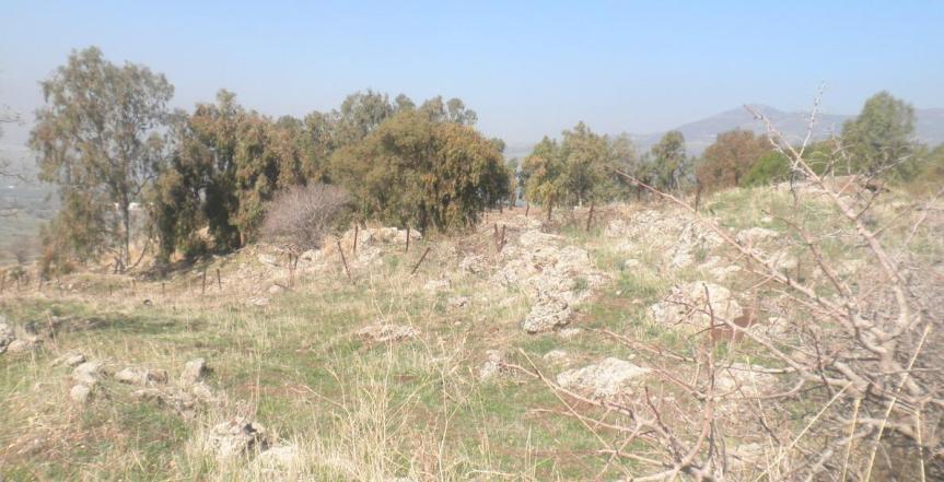 החלק הדרומי של תל פאחר, האיזור שבו לחם יהושע ישי. העץ מימין: החלק הצפוני של המוצב