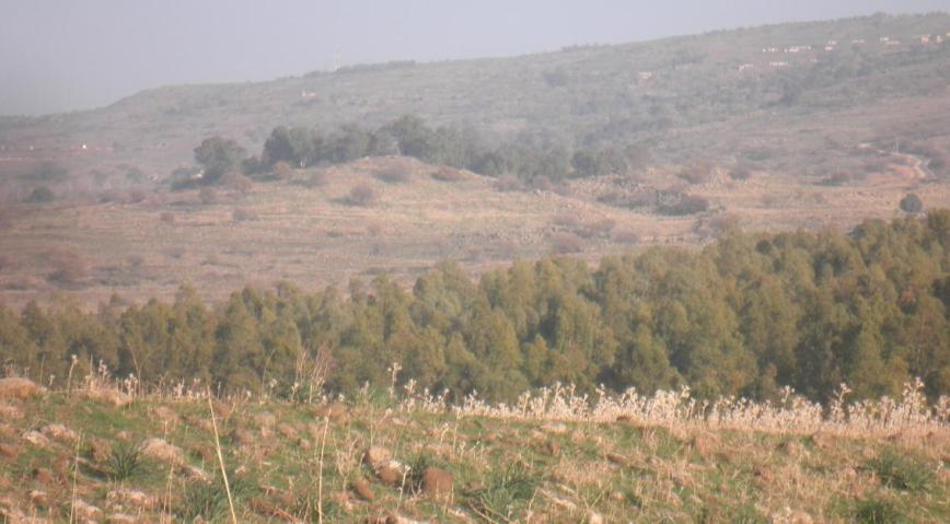 צילום תקריב מאיזור תל עזזיאת אל תל פאחר (הגבעה עם העצים במרכז התמונה)
