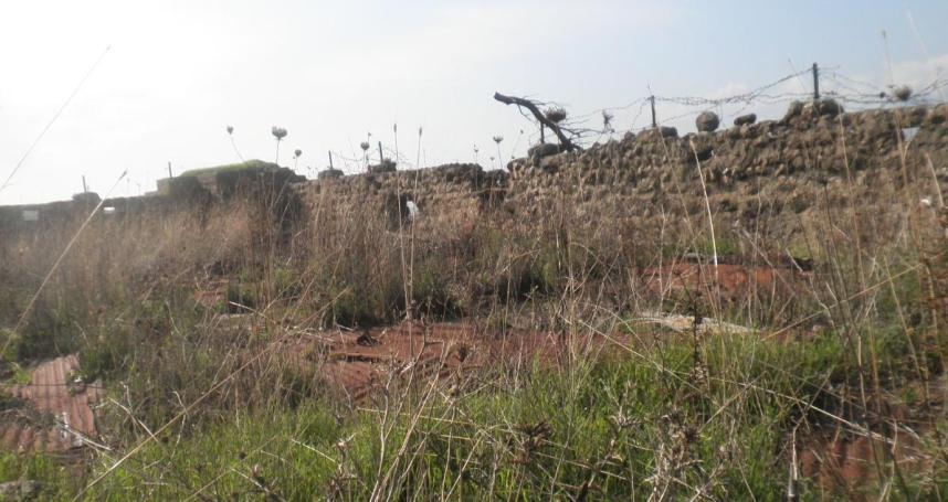 בחצר של בחריאת