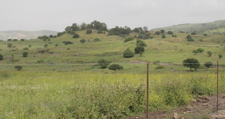 מבט אל תל פאחר מאיזור בורג' בביל
