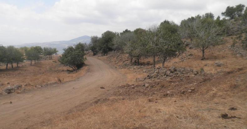 הדרך הנכנסת [מדרום] אל הכפר זעורה
