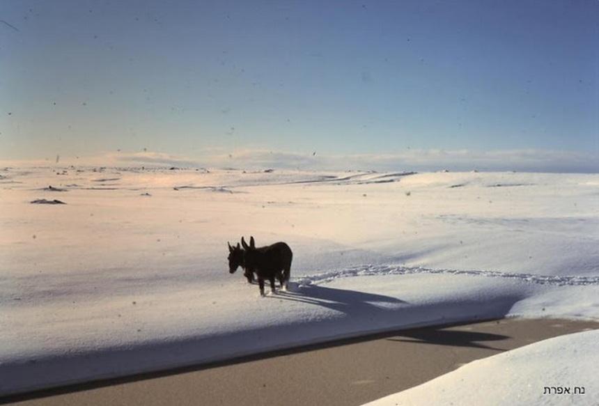 חמורים בשלג 1974