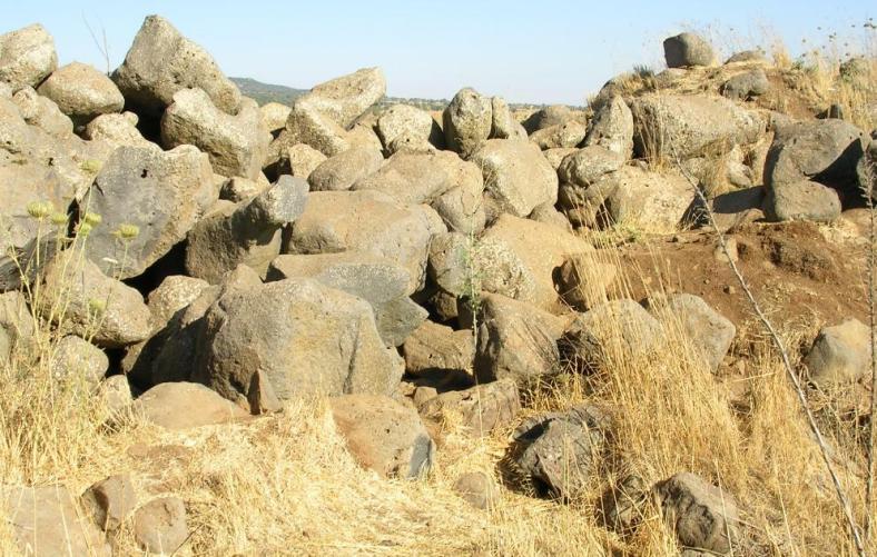 מאורת זאבים בשדה מוקשים בתל חזיקה (צילום: אלון רייכמן)