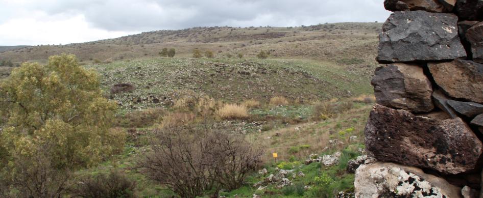הגבעה הירקרקה שממול. צילום ממוצב ג'לבינה