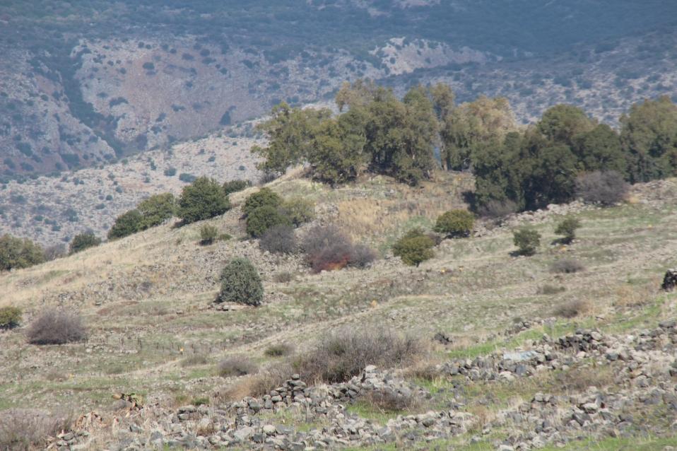 צילום תקריב של תל פאחר כקילומטר אחד דרומית לו. לצפייה מיטבית - לחצו על הצילום